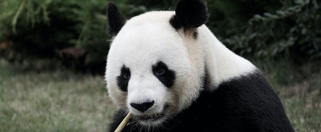 Article sur le zoo de Beauval