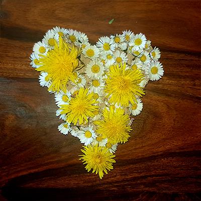 paquerettes et pissenlits pour un coeur en composition florale