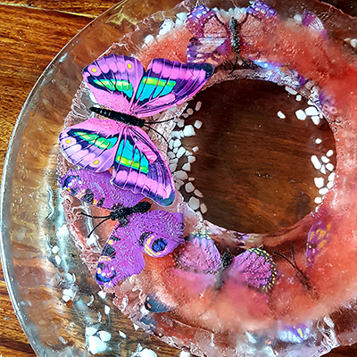 papillon libéré de la glace