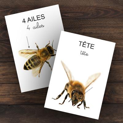 Imagier de l'abeille