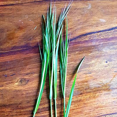 longues herbes